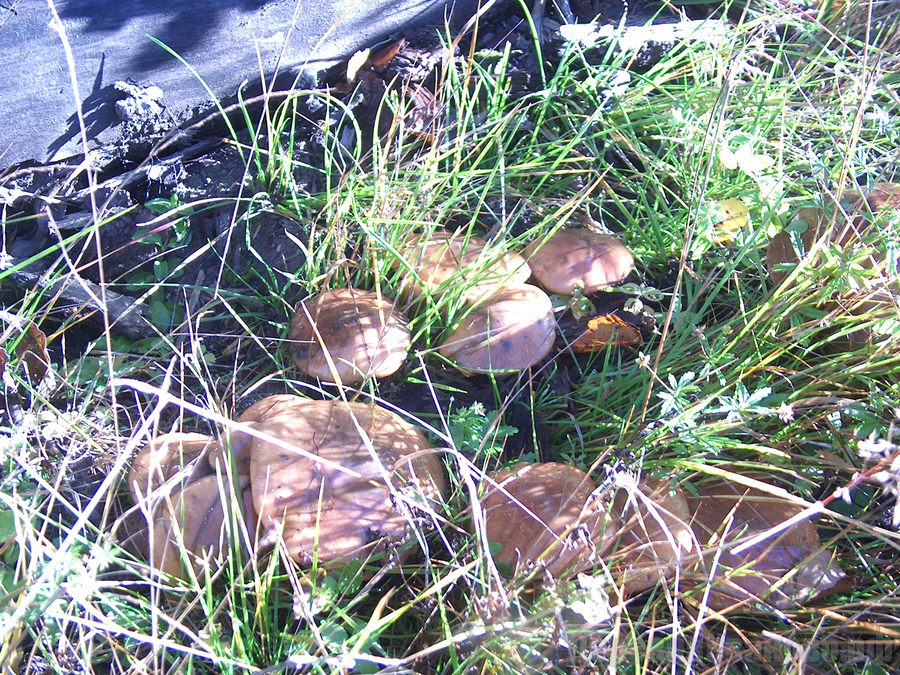 Картинка еловый лес